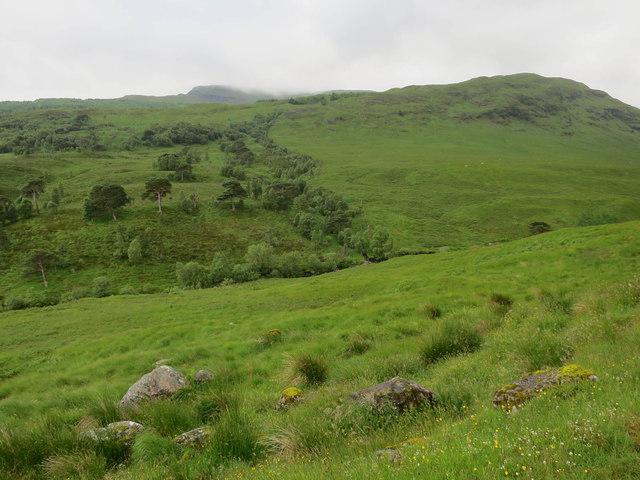 Woodland by River Cononish