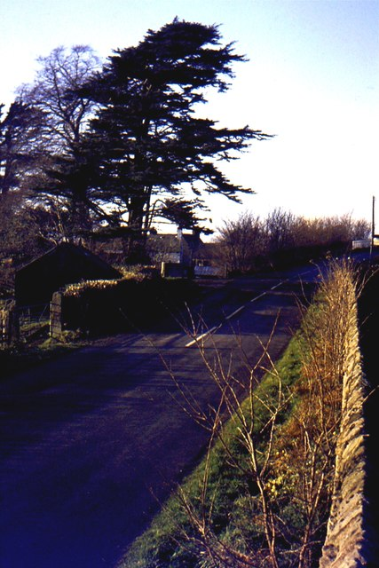 Cedar tree by Borwick railway bridge