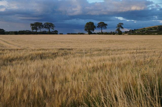 Fields at Crookston, near Wallyford