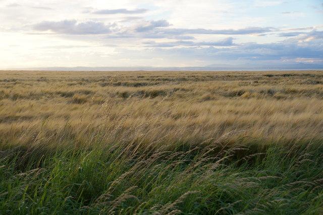 Fields on Falside Hill, near Wallyford