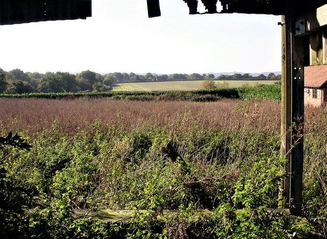 View from Copshall Farm towards Three Oaks