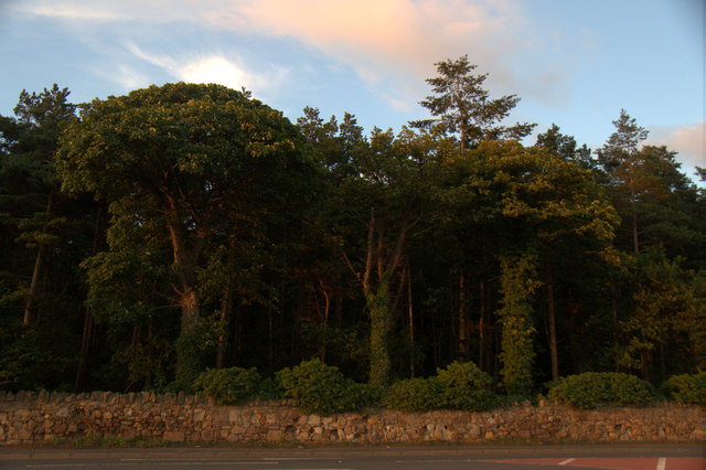 Trees at Carberry