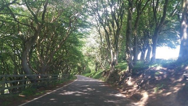 Jackson's Lane, Scarborough