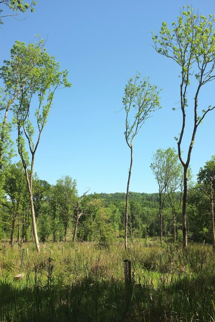 Open woodland, Bower's Coppice