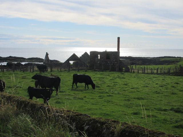 Ruins at Mains of Usan
