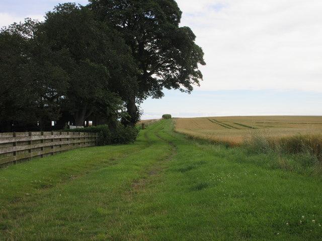 Track at Ferryden