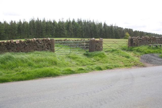 View towards Beacon Plantation from Salkeld Road