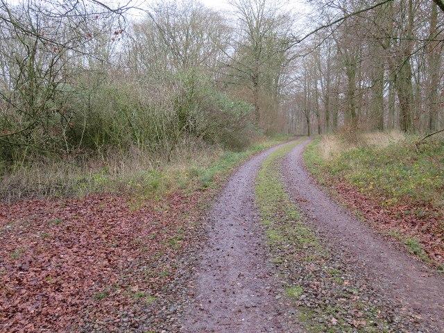 Forest track - Blackwood
