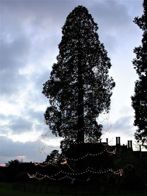 Decorated Christmas tree at Wakehurst Place