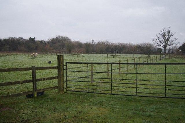 Sheep paddock - off Sainfoin Lane
