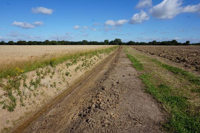 Path leading towards Harlthorpe
