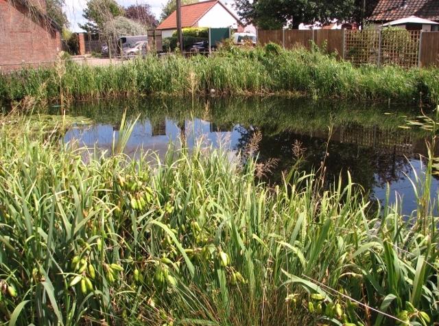 The village pond in Surlingham