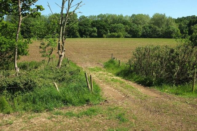 Path between fields near Chedington Woods