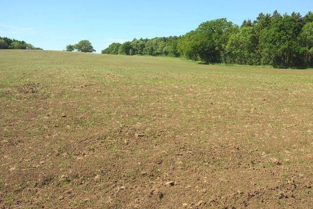 Arable field near Chedington Woods