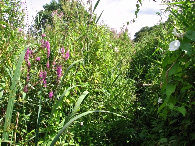 Disused path beside the River Yare