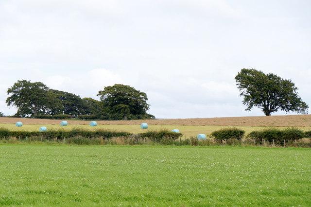 Gallow Hill above Gorebridge