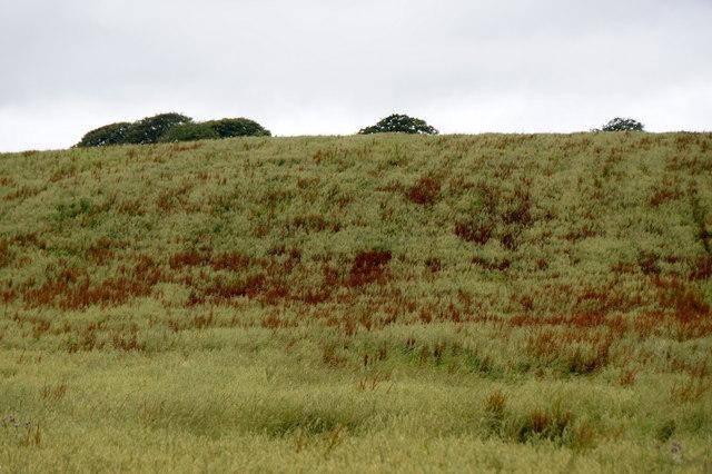 Fields west of Crichton