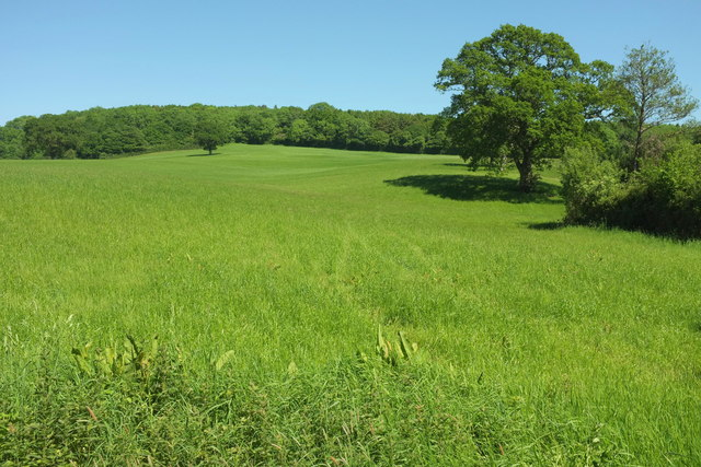Grassland with trees north of Romsey Farm