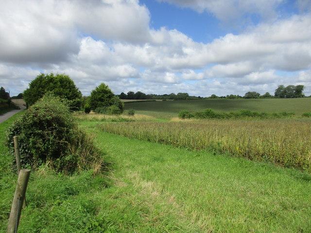 Alongside Westfield Drove