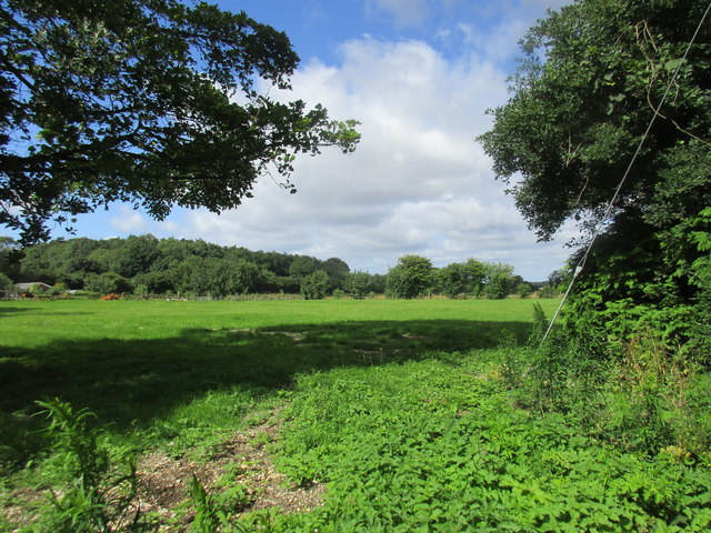 View towards Millbarrow Plantation