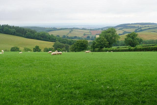 Sheep below Birches Corner
