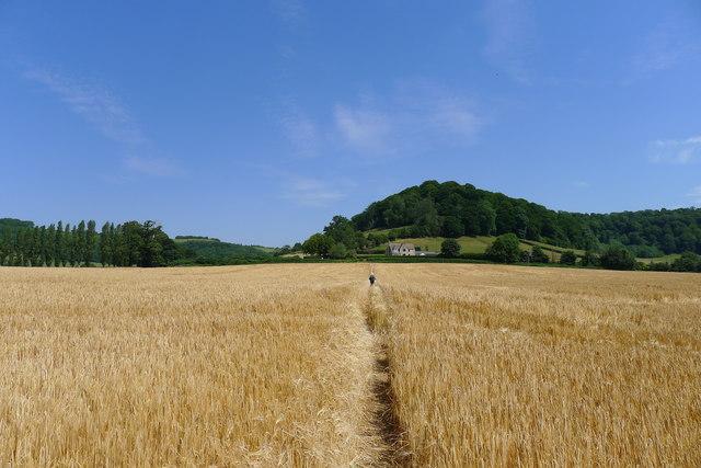 Through barley to Park Lane