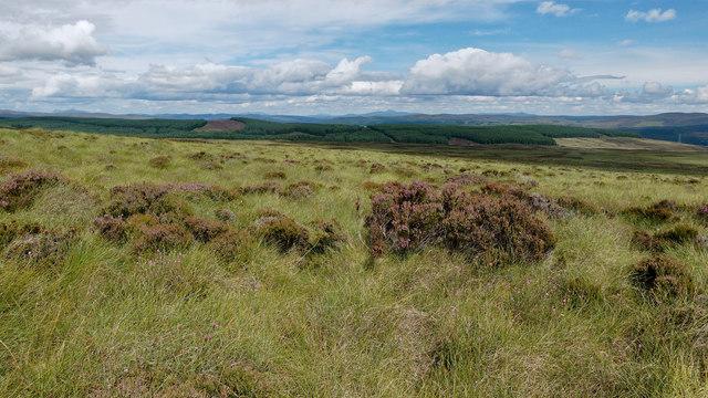 Hillside above the Wester Fearn Burn