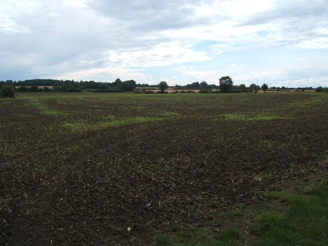 Field, Pigstye Green