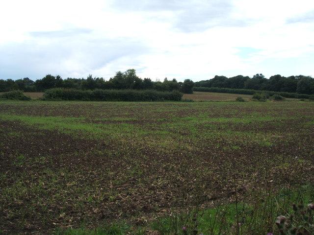 Field off Pigstye Green Road