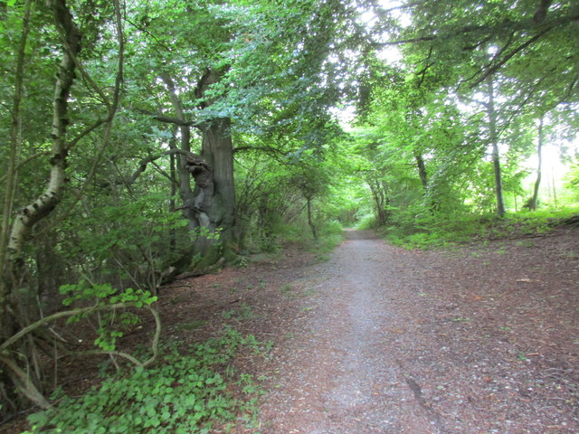 The Monarch's Way in Beaconhill Beeches