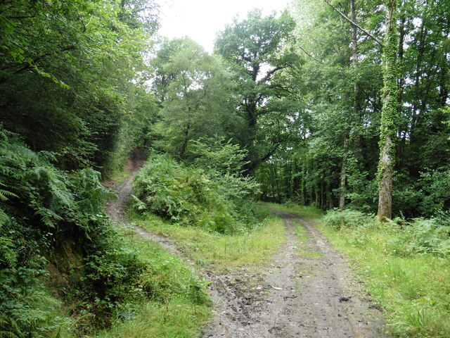 Path junction in Bickleigh Woods