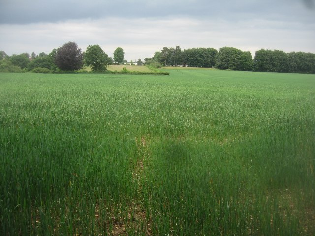 Field east of Pardown