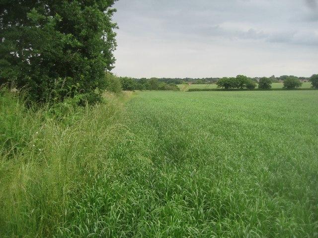Great Wildcroft Field (20.5 acres)