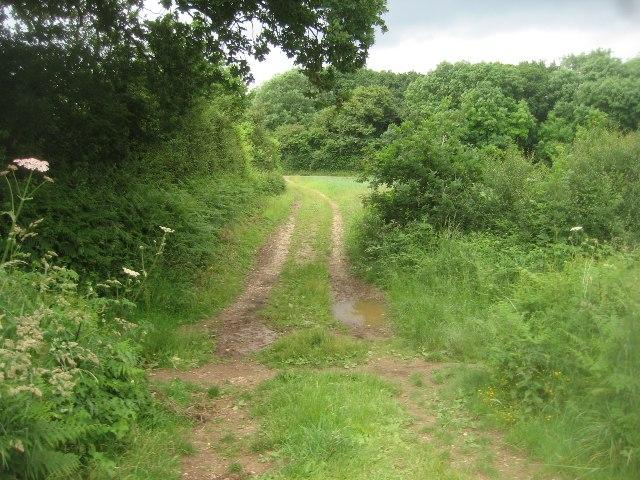 Track towards Jeffery's Copse