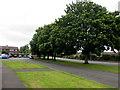SO3015 : Roadside trees, Mardy by Jaggery