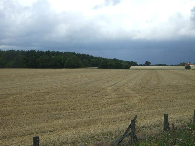 Stubble field towards Latton Park