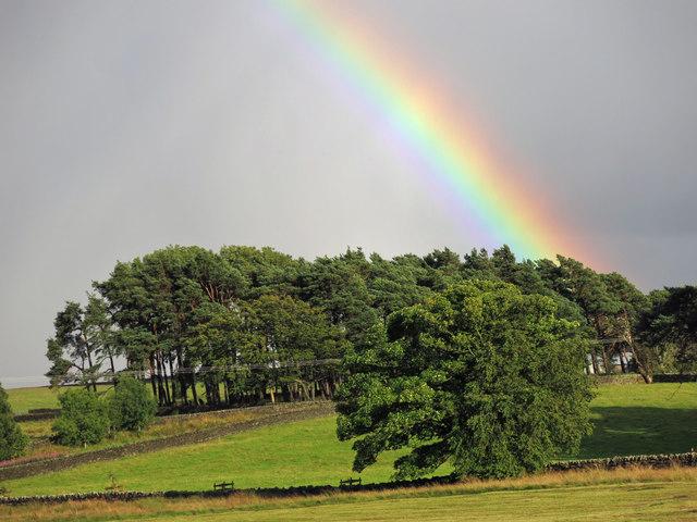 Rainbow over a copse near The Spittal