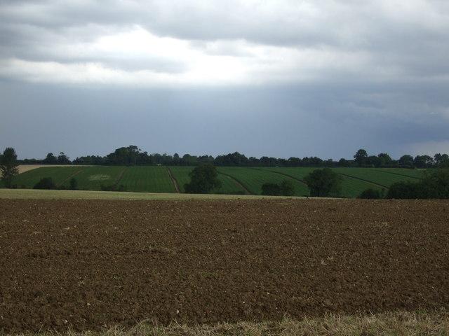Fields near Spencers Farm