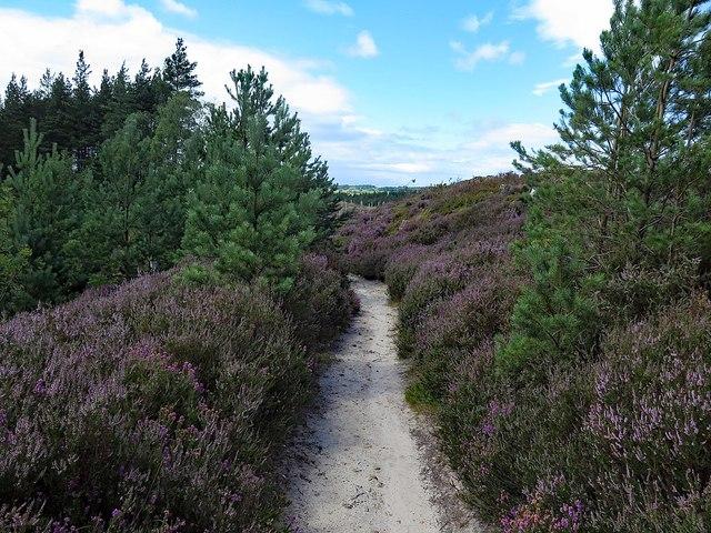 Path through Dipton Wood