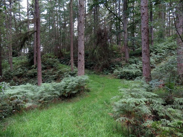 Forest ride, Dipton Wood