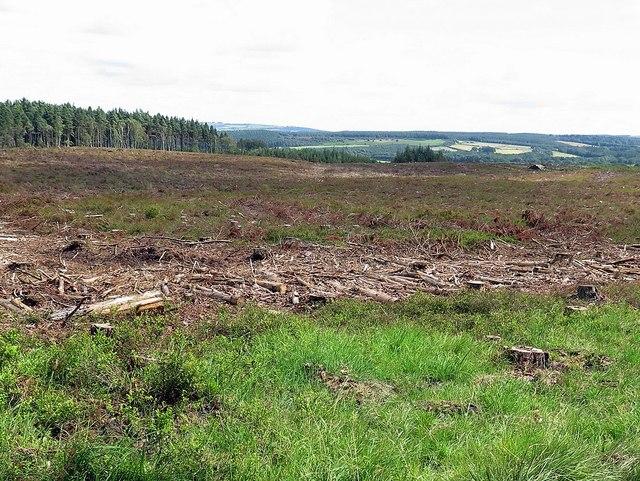 Felled area, Dipton Wood