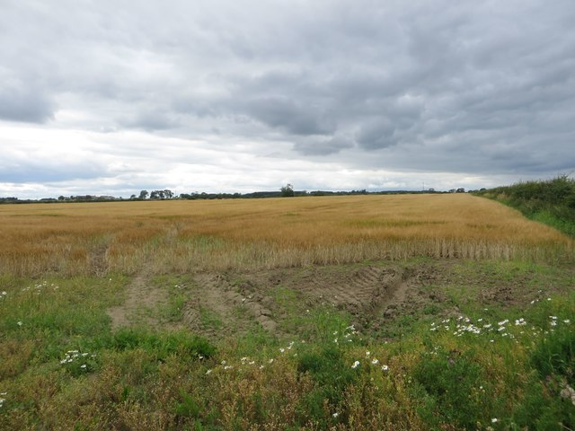 Arable field south of Ulgham