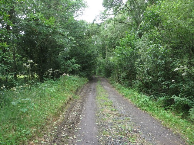 Forest track and bridleway