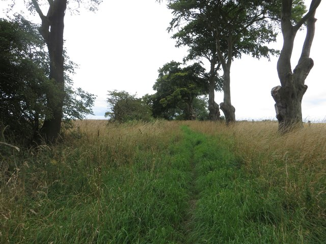 Bridleway between arable fields