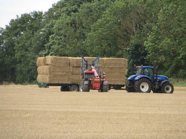 Loading straw north of Broomhaugh