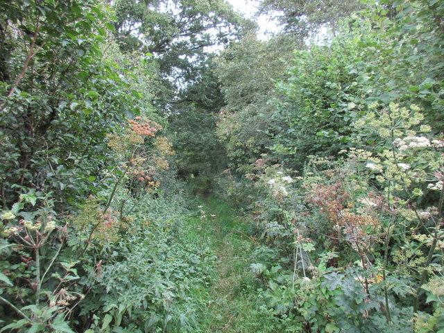 Footpath to Beauworth