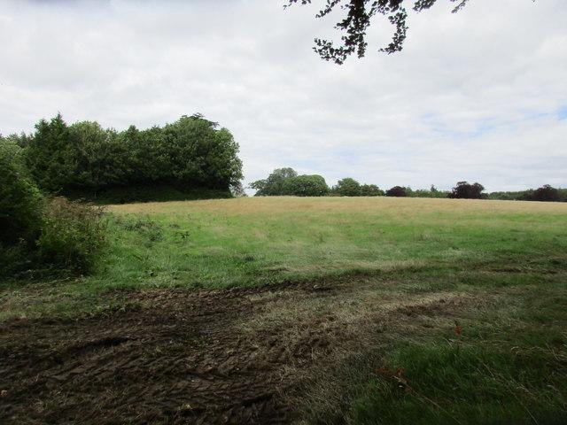 Field near Brockwood Park