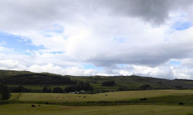 Cattle near Achindaul