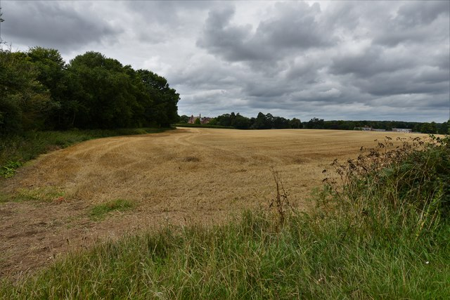 Ditchingham, Thwaite Road: Harvested field at Hollybush Farm