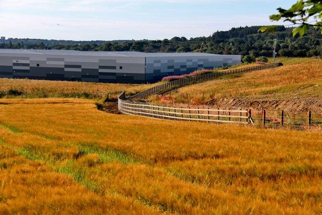 Golden grain at Newton
